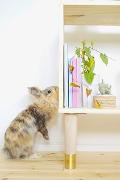 DIY Box Sideboard featuring Prettypegs and a cute bunny :) Thanks @FallForDIY #prettypegs #furniturelegs #estellelegs #diy