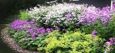 perennapenkki Terrace Garden, Tree Branches, Curb Appeal, Art Pieces, Landscape, Park, Garden Ideas, Flowers, Plants