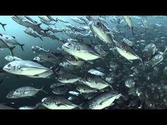 Best Places To Enjoy Scuba Diving Holiday - Scuba Dive Junkie | Learn Scuba Diving