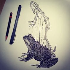 Artist Creates Stunning Anatomical Sketches Of Animals Leaving Their Skeletons - DesignTAXI.com