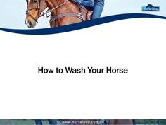 Learn how to wash your horse correctly. #horse #equine #equinegrooming #animals