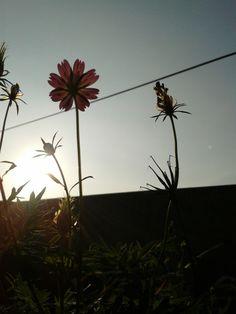 bunga ini tersenyum waktu liat matahari, tapi kok aku engga?