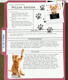 America's Most Unwanted Pet Health Conditions: Feline Asthma