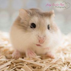 Hamster Würmchen Hamsters, Animals, Swimming, Small Animals, Animal Photography, Animales, Animaux, Animal, Animais