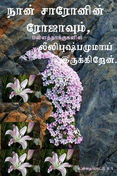 Tamil Bible Words, Bible Verse Wallpaper, Amen, Bible Verses, Wallpapers, Wallpaper, Scripture Verses, Bible Scripture Quotes, Bible Scriptures