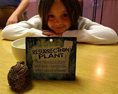 Great activity for Sunday school during the Lent and Easter season. Perfect for Catholic and parochial schools because the Resurrection plant not only teaches about Jesus Christ and Easter, but science and geography.