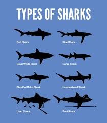 1000+ ideas about Basking Shark on Pinterest | Whale ...