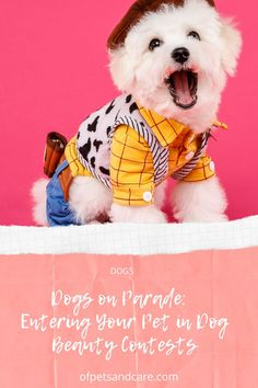 Dog lovers will surely be familiar with dog beauty contests. You might even have gone to several of these dogs on parade contests already. Pet Dogs, Pets, Beauty Contest, Your Pet, Dog Lovers, Teddy Bear, Animals, Animales, Animaux