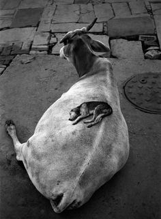 Pentti Sammallahti. Varanasi, Indien, 1999.