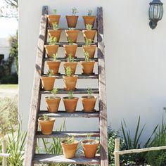 Sit 'n ou houtleer skuins oor 'n bedding neer as ekstra pakplek vir kruie en lieflike aardse tekstuur in die tuin.