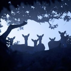 Deer beloved  #ALDOpinthetrends