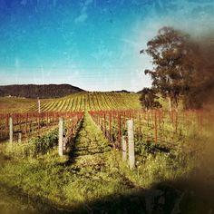 Homewood Winery #Sonoma #travel #winecountry #vineyard