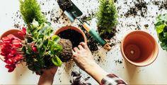 Přírodní hnojivo vás nemusí vyjít zrovna na stovky korun Watering Can, Canning, Plants, Plant, Home Canning, Planets, Conservation