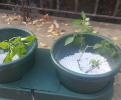 How to set up an Autopot hydroponics kit Organic Hydroponics, Hydroponic Farming, Hydroponic Growing, Growing Plants, Compost Tea, Invasive Plants, Buy Plants, Grow Lights