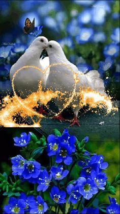 Good Morning Beautiful Flowers, Beautiful Flowers Images, Beautiful Nature Pictures, Beautiful Nature Scenes, Beautiful Fantasy Art, Beautiful Roses, Wallpaper Nature Flowers, Rose Flower Wallpaper, Flower Background Wallpaper