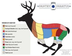 Fillet knife venison cut chart Deer | where to find Neck, shoulder, loin, ribs, tenderloins, flank, sirloin tip, rump and round on a Deer. | graphic from Pantry P | survival