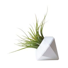 Dress up natural elements in your home with the simple and striking Natural Gem Planter. The diamond is formed from gypsum plaster and finished in your choice of white, silver, or gold enamel paint for...  Find the Natural Gem Planter, as seen in the How to Design an Industrial Sunroom Collection at http://dotandbo.com/collections/how-to-design-an-industrial-sunroom?utm_source=pinterest&utm_medium=organic&db_sku=102677