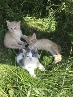 Our work cats kittens got to explore the outdoors for the first time today. https://ift.tt/2Jk3Ofb cute puppies cats animals