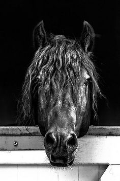 cheval | portrait | boxe