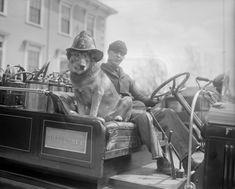 A truly brave fire dog by Leslie Jones, 1928.