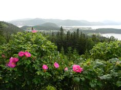 Overlooking Norris Point.  Wouldn't that be a lovely spot for someone to have wedding photos taken?  Bet I'm certainly not the first to think of that  :)