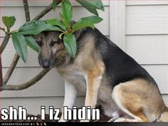 funny dog pictures with words  | funny-dog-pictures-shh-hidin.jpg