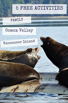 5 FREE activities in the Comox Valley! Familienaktivitäten 5 FREE Year-Round Family Activities In The Comox Valley - Traveling Islanders Vancouver Island, Free Activities, Family Activities, Island Winter, Columbia Outdoor, Canada Travel, Canada Trip, Best Places To Travel, Island Life