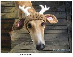 Reindeer??