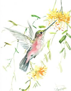 Hummingbird Oriignal watercolor painting 14 X 11 by ORIGINALONLY, $48.00