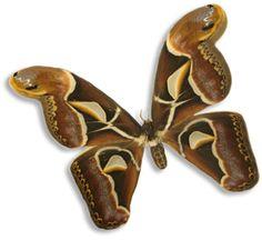 Pix For > Moth Clip Art | Moths | Pinterest | Konst och Clip art