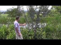 fruit tree guilds : FoodProduction101 | Grow Your Own Food | Chicken Care