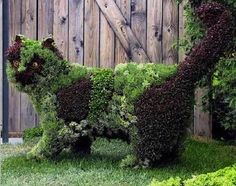 Cat at Montreal's Topiary Garden