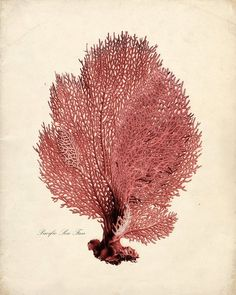 CORAL (i know.. i know.. past.. but i couldn't resist!) - Sea Coral Print from Vintage by the Shore.