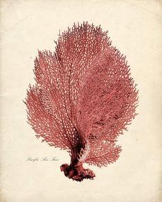 Vintage Sea Fan Print