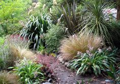 The Moosey Native Garden – NZ natives, but they look a lot like the Aust ones…… - Gartengestaltung Australian Native Garden, Australian Plants, Bush Garden, Garden Shrubs, Garden Plants, Coastal Gardens, Small Gardens, Side Gardens, Garden Ideas Nz