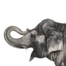 Image result for andrew zuckerman animals