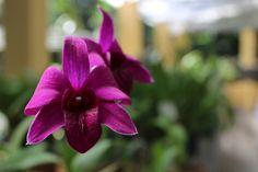 Orquídea - Orquidário do Jardim Botânico  do Recife Plants, Recife, Walkway, Flora, Plant, Planting