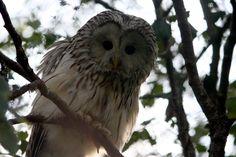 Suomi Tour: Ranua Zoo Finland Travel, Owl, Tours, Bird, Nature, Animals, Naturaleza, Animaux, Animales