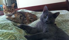 The most accurate picture of my cats I have. - Imgur