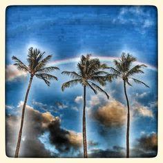 Aloha Sunday from Pipeline Clothes & Gear. Have a great day and enjoy the weekend. #pipelinegear #pipelinesurfshop #pipeline #banzaipipeline #tshirts #hawaii #northshoreoahu #oahu #honolulu #paradise #palmtrees #palms #aloha #sunday #weekend #rainbow