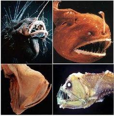 Peixes Abissais - Características e Fotos, Vida em Regiões Profundas Os peixes abissais têm outra característica, algumas das quais curiosas