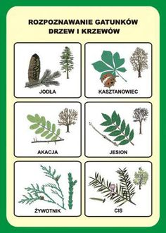 Pospolite drzewa i krzewy Montessori, Flora, Survival, Language, Science, Education, Plants, Geography, Speech Language Therapy