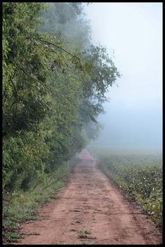 Country road ~ photographer Wes Thomas  #South #Southern #Alabama