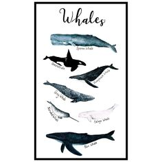 Whale Illustration, Narwhals, My Arts, Batman, Watercolor, Fictional Characters, Instagram, Pen And Wash, Watercolor Painting