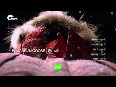 네파 이서진광고 ,2PM택연광고 네파 헤비다운 알라스카 방수다운 CF - YouTube - Nepa Alaska