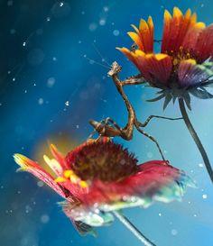 #mantis de la fotógrafa malaya Lee Pei Ling