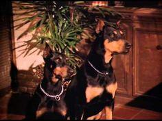 Magnum, P.I. S06E14: Mad Dogs and Englishmen