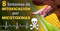 Advertencia para los dueños de las mascotas: los granos y el maíz dieron positivo a altos niveles de micotoxinas, sustancias toxinas generadas por fungi. http://mascotas.mercola.com/sitios/mascotas/archivo/2017/05/08/envenenamiento-animal-por-micotoxinas.aspx