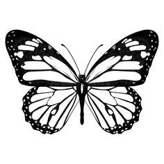 Mini Tattoos, Black Tattoos, Body Art Tattoos, New Tattoos, Small Tattoos, Butterfly Stencil, Butterfly Drawing, Butterfly Tattoo Designs, Butterfly Black And White
