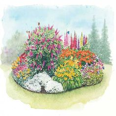 garden layouts, that come with flowers for nice price.